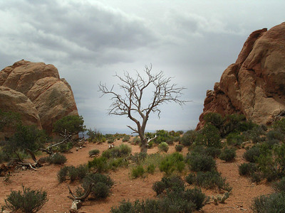 Lone Tree in Arches National Park, UT