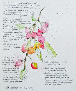 Ripe Wild Crab Apples - Watercolor and Pen and Ink
