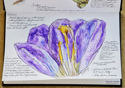 Crocus Materials Used: ~ Stillman & Birn Beta Series Art Journal ~ Albrecht Durer Watercolor Pencils by Faber-Castell