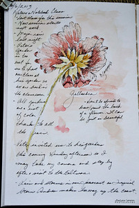 Gallardia ~Watercolor in Nature Journal