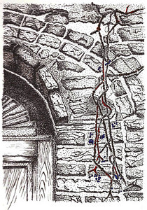 Bricks and Vines  Stipple Drawing - Stipple drawing is an artistic technique where the artist places an intricate series of small dots together to achieve continuous tone in a drawing.