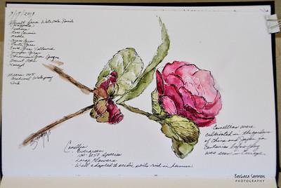 Pink Camellia Materials Used: ~ Stillman & Birn Beta Series Art Journal ~ Albrecht Durer Watercolor Pencils by Faber-Castell
