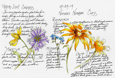 Garden Flowers Pen and ink with colored pencil