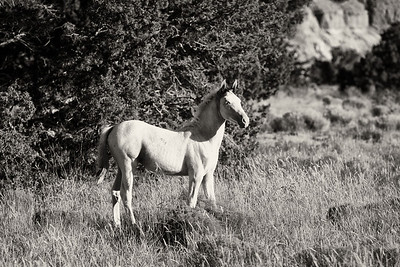 Spring Colt Wild Horses Rachael Waller