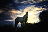 Noqah at last light<br /> Rachael Waller Photography<br /> Medicine hat rescued mustang