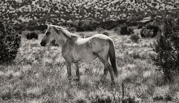 Horse of the Earth  Rachael Waller Photography wild horses