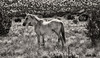 Horse of the Earth<br /> <br /> Rachael Waller Photography<br /> wild horses