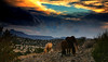 Firelight South ranch<br /> Home of rescued slaughter bound wild and domestic horses. <br /> Alpine Texas<br /> Rachael Waller Photography