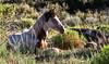 Baby Bono <br /> Wild Horses<br /> Rachael Waller Photography