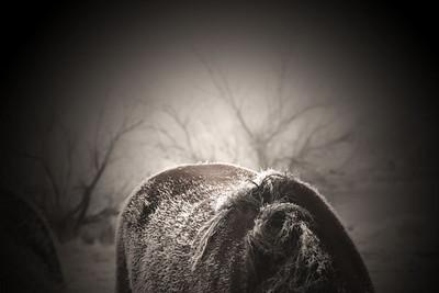 Winter Coat Rachael Waller Photography 2010