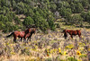 Wild horses take a moment to check us out<br /> Rachael Waller Photography