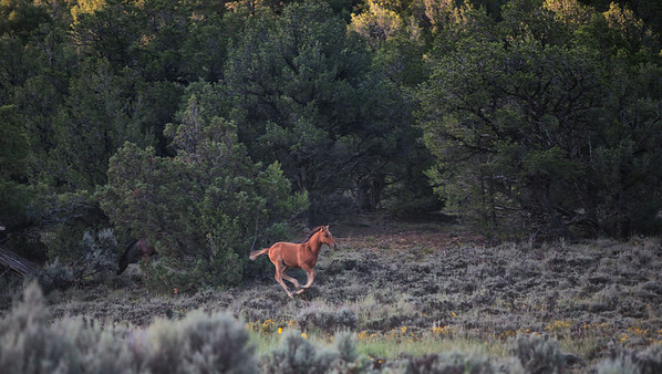 Catchin up<br /> <br /> Rachael Waller Photography<br /> Wild horses