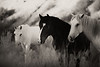 Sun Dancer and his Mares<br /> Wild horses -New Mexico<br /> Rachael Waller Photography<br /> <br /> New at Kiowa Gallery