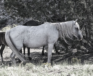 The rest Rachael Waller Photography Wild Horses