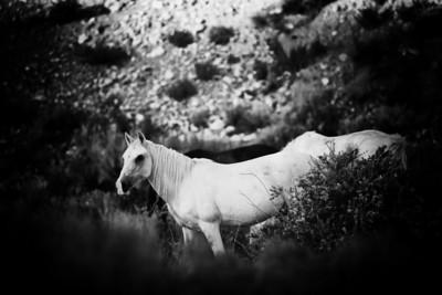 Nana in the morning wild horse New Mexico Rachael Waller Photography