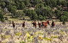 Mountain Band<br /> Wild Horses<br /> Rachael Waller Photography