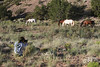 My daughter Cheyenne age 8 photographing a band of wild horses for the first time.<br /> <br /> Rachael Waller Photography 2010