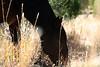 American Beauty<br /> Fall <br /> 3 strikes survivor<br /> Mustang<br /> Rachael Waller