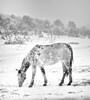 Mustang in the snow<br /> Rachael Waller Photography