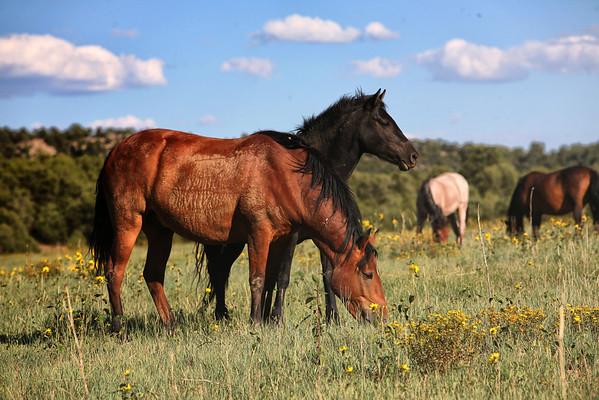 Graze.<br /> Rachael Waller<br /> Wild Horses
