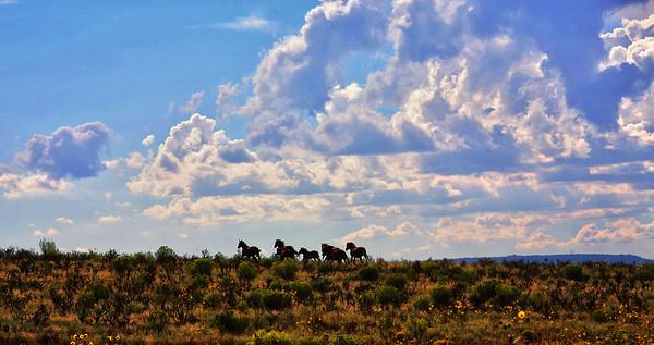 Wild horses running free<br /> Rachael Waller Photography