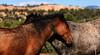 Rest<br /> <br /> Wild horses<br /> Rachael Waller Photography 2010