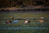 Sun down with Stiles and his herd<br /> wild horses<br /> Rachael Waller Photography