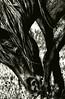 Mud Mane<br /> <br /> Wild Stallion and his wonderfully wild mane.<br /> Rachael Waller Photography 2010<br /> <br /> Featured at Kiowa Gallery Alpine Texas