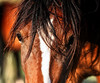 Band Stallion<br /> Sun Dancer<br /> wild horse<br /> Rachael Waller Photography