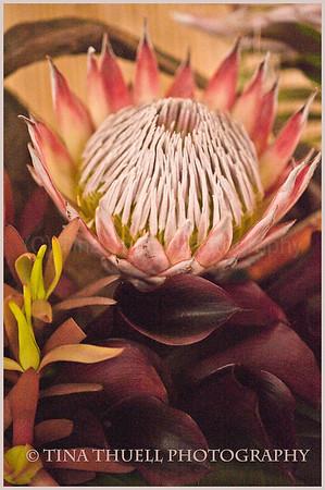 Newport Flower Show  2010