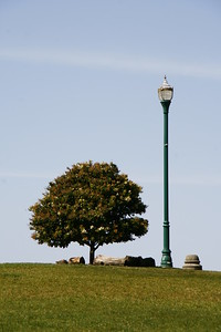 I found this tree scene at Alamo Square Park in San Francisco.