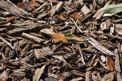 Camouflage  Bok Tower Gardens // Lake Wales, FL //