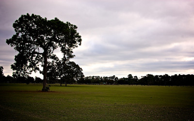 The Tree in The Landscape // Near Tavares, Florida //