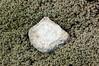 noway--stone in heather