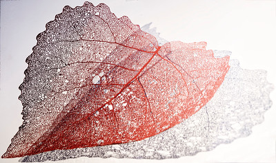 One Heartshapped Leaf full of Life loses passion and is left with shadow of itself :-)