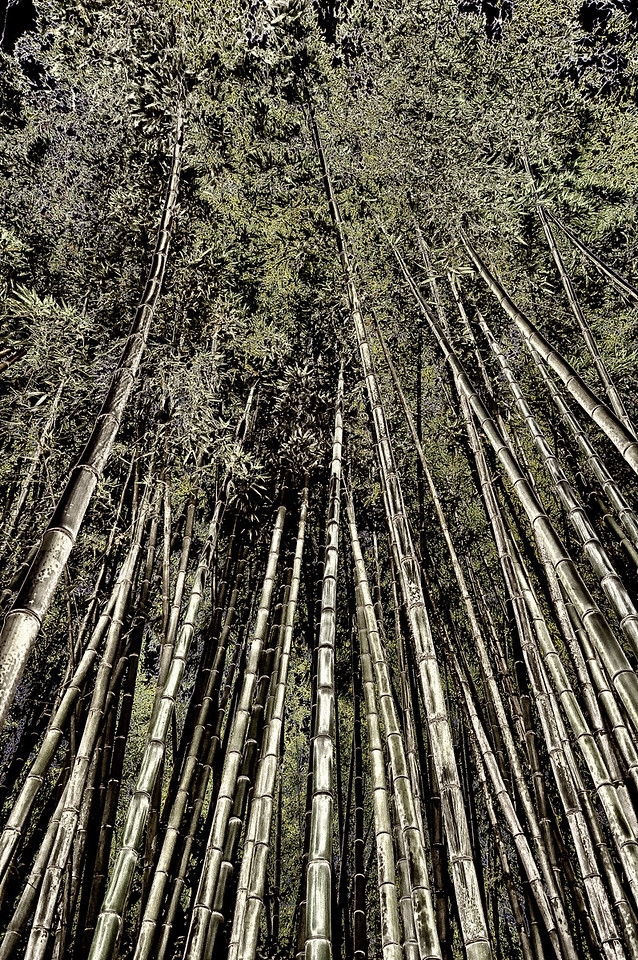 Black Forest Bamboo