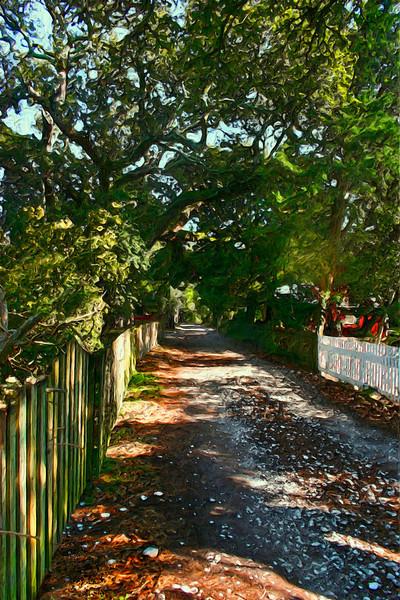 A shady walk down Ocracoke's historic Howard Street.