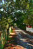 A shady walk down Ocracoke's historic Howard Street.