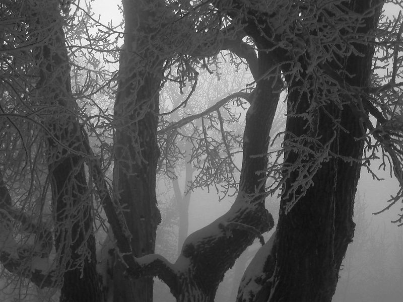 Cold and Creepy