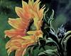 """Sunflower series 3"""