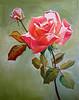 """ Peace Rose """