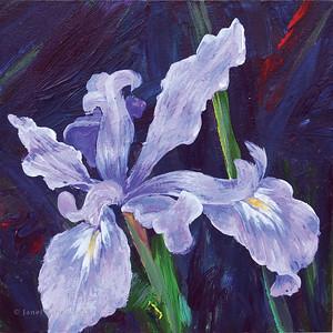 Purpled iris