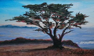 3x5 carmel cypress canvas