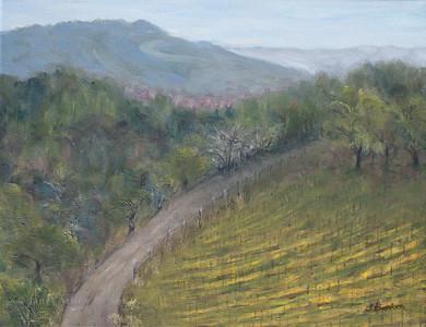 Paradise Ridge Vineyards in Spring