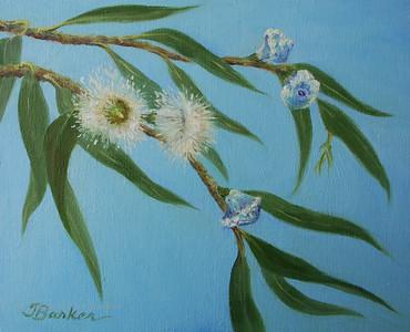 Eucalyptus Celebration