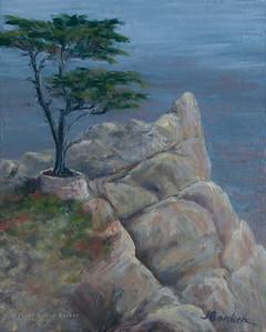 Lone Cypress 8x10-1
