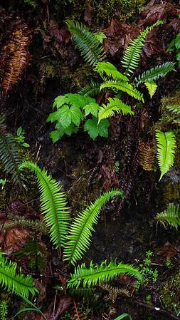 Rain Forest Plants, Bunch Falls