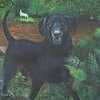 Brandie<br /> <br /> I put the 'Scotchie' English Setter painting on hold until finishing a portrait of our Black Lab 'Brandie'.   We lost her to lymphoma two weeks ago.  She was just 9 years old and Scotchie's adopted sister.  As we took her in for her regular 6 month checkup she was having trouble breathing.  Tests showed she had advance lymphoma. <br /> <br /> After a week of prednisone, and scouring the internet for more holistic choices, she couldn't hold on any longer.  I'm giving dog owners the name of another dog lover who faced the same decisions and compiled a book claiming he was able to sustain his companion for over a year with alternate treatments. <br /> <br /> We miss her so much, but hope that perhaps this information may help someone else in time.  We didn't have a chance to find out.  Contact Ted Schneck:  ted@curing-canine-cancer.com   <br /> <br /> Note:  Brandie's favorite things are in the painting.  She loved water, chasing bugs and small critters and she loved her Scotchie.<br /> <br /> Medium:  Acrylic on Canvas