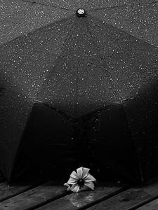Flower under the rain / Fleur sous la pluie