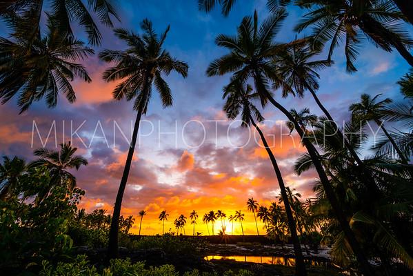 Coconut Grove Final 2
